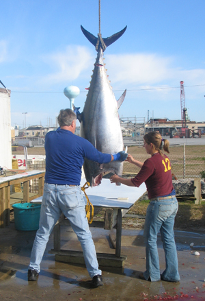 Couple bluefin pictures for Wildwood fishing charters
