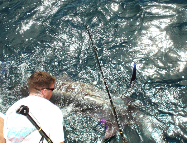 Offshore fishing reports for Ocean city nj fishing charters