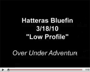 Hatteras Bluefin tuna video