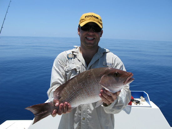 Key West grey snapper