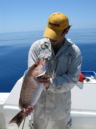 KW grey snapper