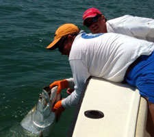 Marquesas Tarpon Fishing