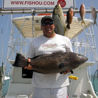 Tortugas Grouper